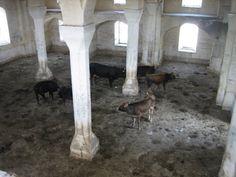cows Cows, Animals, Home Decor, Animales, Decoration Home, Animaux, Room Decor, Animal, Animais