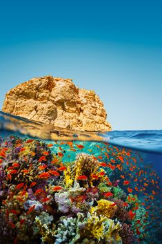 Countries Around The World, Around The Worlds, Places To Travel, Places To See, Sharm El Sheikh, Red Sea, Sea World, Ocean Life, Amazing Destinations