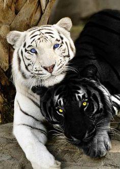 The Amazing Intelligent Wild Life Majestic Animals, Rare Animals, Animals And Pets, Funny Animals, Exotic Animals, Strange Animals, Big Animals, Wild Life Animals, Funny Cats