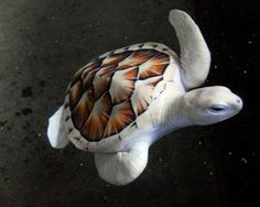Leucistic sea turtle has a genetic defect which causes reduction of pigment on the body.-What a beautiful turtle!!