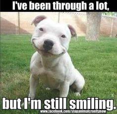 Bully Smile