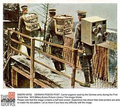 GERMAN PIGEON POST: Carrier pigeons used by the German army during the First World War. 1915 ©Mary Evans Picture Library /