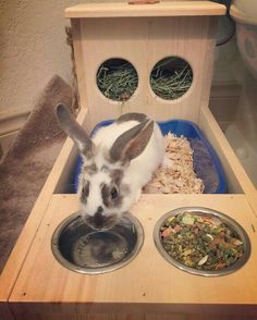 Bunny Rabbit Hay Feeder With Built in Litter Box and Food and Rabbit Litter Box, Rabbit Toys, Bunny Rabbit, Bunny Cages, Rabbit Cages, Indoor Rabbit Cage, Rabbit Hutch Indoor, Indoor Rabbit House, Rabbit Cage Diy