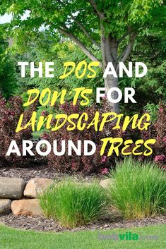 Shade Garden The Dos and Don'ts for Landscaping Around Trees.Shade Garden The Dos and Don'ts for Landscaping Around Trees