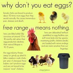 Why we don't eat eggs