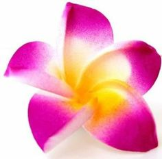 Tropical Hawaiian Flower Hair Clip - (Various Colors), Magenta by Luxury Divas. $1.99. Material: Nylon / Polyester w/Black Clip On. Tropical Flower Womens Hair Clip