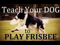 Lovable Dogs How To Teach Your Dog To Play Frisbee - Lovable Dogs