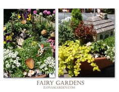 List of Hardiness Zones for Plants for Fairy Gardens.