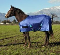 Kensington Adjustable Weanling Polymax Fly Sheet, Blue Ice, 50-58-Inch by Kensington. $69.40. Detatchable leg straps. Criss cross belly straps. Lightweight & breathable fly sheet. Protects against insect bites. Keeps your horse cooler. A Lightweight- Ultra-breathable PolyMax Fly Sheet now featured in adjustable Weanling/pony sizes! This fly sheet not only keeps your weanling/pony cooler, but offers great comfort from biting insects. Its features include criss-cross belly s...