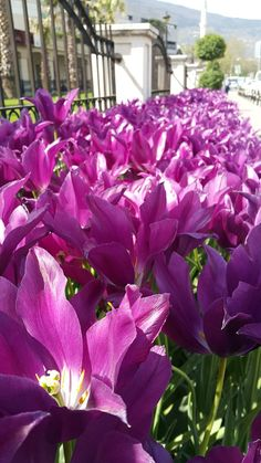 Purple Flowers by burak karaca on 500px