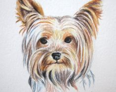 Yorkie Dog Colored Pencil Drawing, Original Yorkshire Terrier Drawing, Colored Pencil mini art, Dog Lover Gift