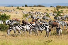 Welkom bij Jambo Safari Club -