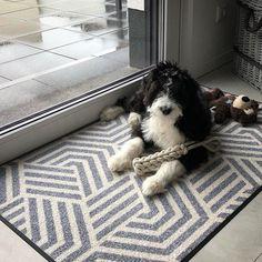 """wash+dry Floor Fashion auf Instagram: """"Dürfen wir Euch Buddy 🐶 vorstellen? Der kleine Mann fühlt sich auf unserem Design ODIN mehr als wohl! Und wieder sind wir verliebt... in…"""" Dogs, Instagram, Animals, Design, Friends, In Love, Amigos, Animales, Animaux"""