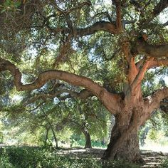 Ranco Santa Ana Botanic Garden