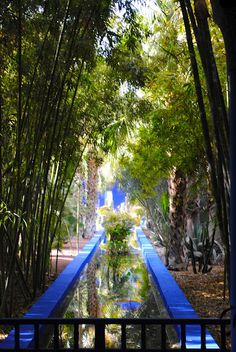 Yves Saint Laurent's garden next door to our apartment. a haven in Marrakech