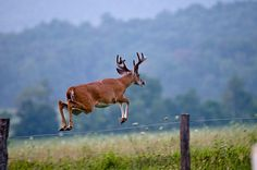 Afternoon in Cades Cove by ~Life by the Drop~, via Flickr