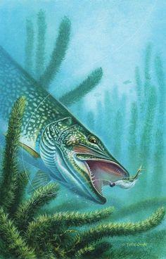 Pike :) http://fishfollowerx.blogspot.com