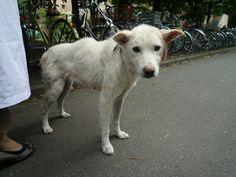 Dogs abandoned at Fukushima, Japan, suffer PTSD-like effects