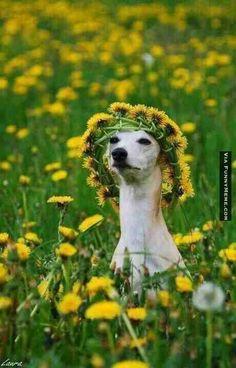 Dog at music festival Blank Meme Template