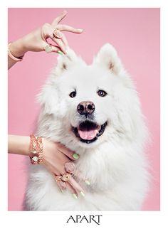 Cute dogs and jewels Jewelry Ads, Photo Jewelry, Jewelery, Jewelry Photography, Animal Photography, Funny Animals, Cute Animals, Samoyed, Dog Photos