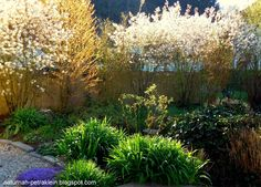 NaturNah: Sonntagmorgen Plants, Nature, Garten, Flora, Plant, Planting