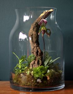 bottle garden terrarium with branch and orchid. so beautiful!