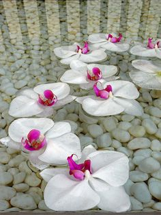 Beautiful white orchids floating in a shallow pool Deco Floral, Arte Floral, Exotic Flowers, Pretty Flowers, Japanese Flowers, White Orchids, White Flowers, Color Splash, Planting Flowers