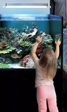 Marine Water Aquarium Set up - with SICCE LED Light Serie AM