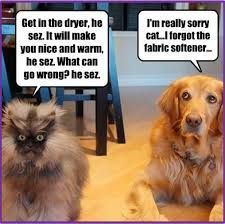 #dogsmemes,#catsmemes,funny animal pictures, cat memes, dogs memes,just like cat, funniest animals, dog fun, dog funny, dog, dogs, dog cute, dog stuff,cat fun, cat funny, cat, cats, cat cute, cat stuff,#funny, #funnyanimals, #funnycats, #funnydogs, cat vs dogs, animal fun