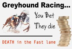 You Bet - They Die. Tens of thousands of greyhounds are disposed of by the greyhound racing industry every year.