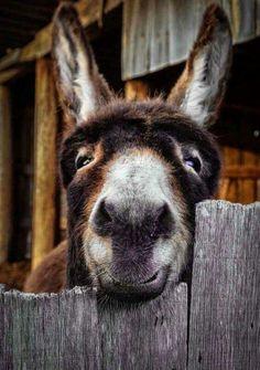 I want to hug this donkey!