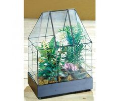 I really want to set up some sort of terrarium this year .. one for outside.