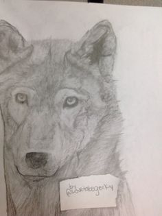 Realistic wolf.. The awkward line by his face will be a tree... The only part of this drawing I like is the right eye. By @Lovetobegeeky