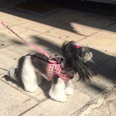 #candy #dog #cute #lady #rosinaperfumery #nicheperfumery #nicheperfumes #perfume #perfumerygreece #highend #luxury #address #giannitsopoulou6 #glyfada #athens #greece #shoponline : www.rosinaperfumery.com  Athens Greece, Perfume, Candy, Luxury, Dogs, Cute, Animals, Animales, Animaux