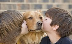 The Golden Retriever Lifetime Study, an effort by the nonprofit Morris Animal Foundation, seeks to enroll of the dogs in hopes of pinpointing exposures that raise the risk of cancer, diabetes and other illnesses that strike dogs. Dog Emotions, Human Food For Dogs, Reactive Dog, Dog Boarding Near Me, Dog Stock Photo, Mindfulness For Kids, Mindfulness Activities, Puppy Birthday, Dog Fence