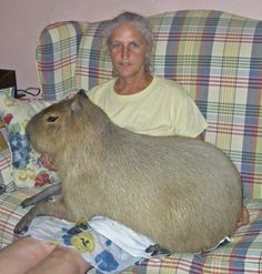 IDK why but capybaras are one of the only animals that completely freak me out, the other is the coconut crab (yeah, Google it if you don't know what it is_
