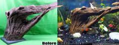 Before And After Picture. Adding Driftwood To Your Aquarium. www.susquehannadriftwood.com www.driftwoodboss.com