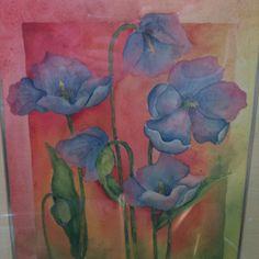 Blue Himalayan poppies