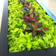 This arrangement will serve as inspiration for garden and condo design as me and a neighbour head our condo gardening committee.  I found this beautifully simple and modern planter contrast of red and lime green at Yorkdale Mall in Toronto.