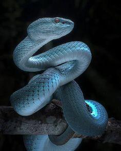 252 Piece Puzzle. Blue Viper Full Awareness