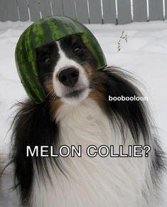 Melon Collie hahaha @Hillary Cohn