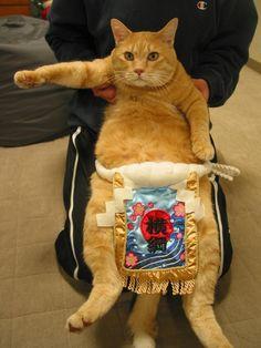 面白い猫画像 28|ねこLatte+