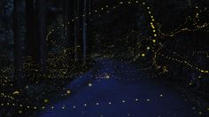 long exposure photographs of gold fireflies, japan. via this is colossal