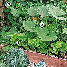 Carré potager : du semis à la récolte - Les bonnes associations