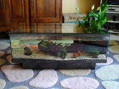Diy fish tank coffee table so gonna do this n put the - Fabriquer aquarium table basse ...