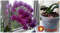 Tip od Janky, ako prebrať orchideu. Ikebana, Flowers, Garden, Orchids, Bonsai, Landscape, Plants, Home And Garden, Gardening Tips