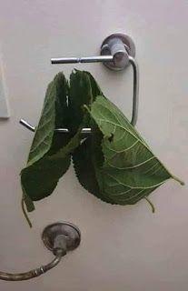 ΧΙΟΥΜΟΡ #nCoV19 #CoronaVirus #κοροναιος #κορωνοιος #CoronavirusOutbreak #COVID19 #covid19Gr - Η ΔΙΑΔΡΟΜΗ ® Green Tips, Picture Postcards, Green Cleaning, Picture Video, Plant Leaves, Recycling, Funny Pictures, Funny Quotes, Diy