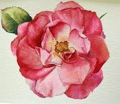 watercolor rose - Buscar con Google