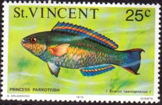 St Vincent 1975 Marine life SG 434 Queen Angelfish Fine Mint SG 434 Scott 418 Other Post Stamps here
