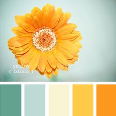Great color scheme and great site! Perfect site for people looking for dream color palette!   http://design-seeds.com/index.php/home/entry/yellow-bloom